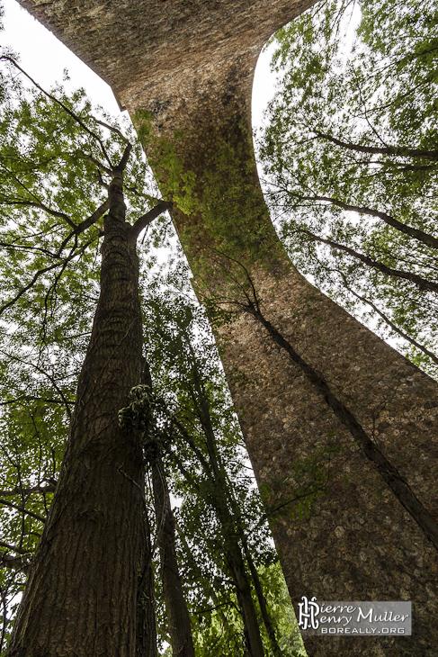 Pilier du viaduc des Fauvettes en parallèle avec un tronc d'arbre