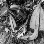 Ancres de péniches abandonnées attendant un ferraillage