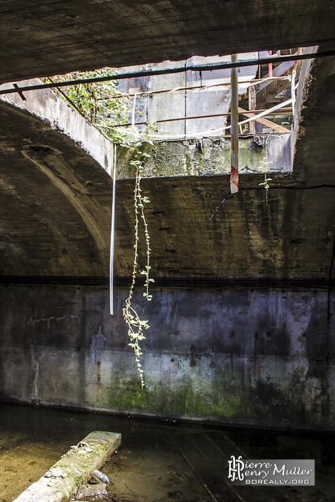 Ouverture entre le souterrain et le rez de chaussée avec végétation