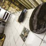 Bérets de mineurs accrochés dans les vestiaires du Hasar de Cheratte