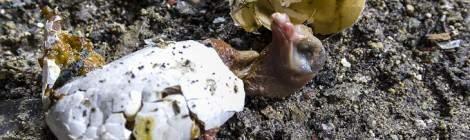 Oisillon mort dans son œuf tombé du nid en haut du chevalement du Hasard de Cheratte.