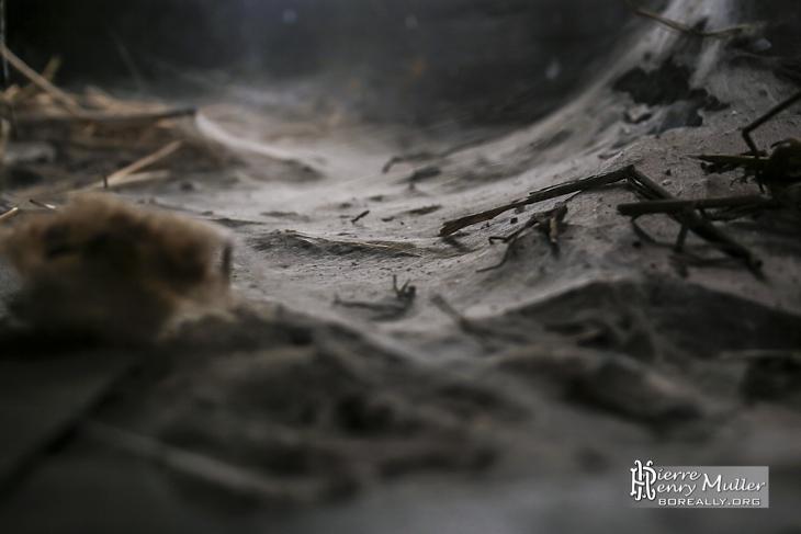 Toiles d'araignées de belle taille dans le grenier du château de Bonnelles