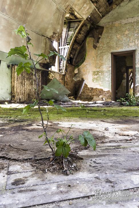 Plante poussant sur le plancher du château exposé aux intempéries