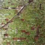 Mur du château Noisy Miranda avec moisissure et mérule