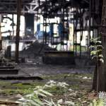 La nature reprend ses droits dans la friche industrielle