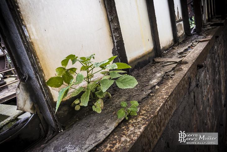 Plante poussant sur le rebord d'une fenêtre