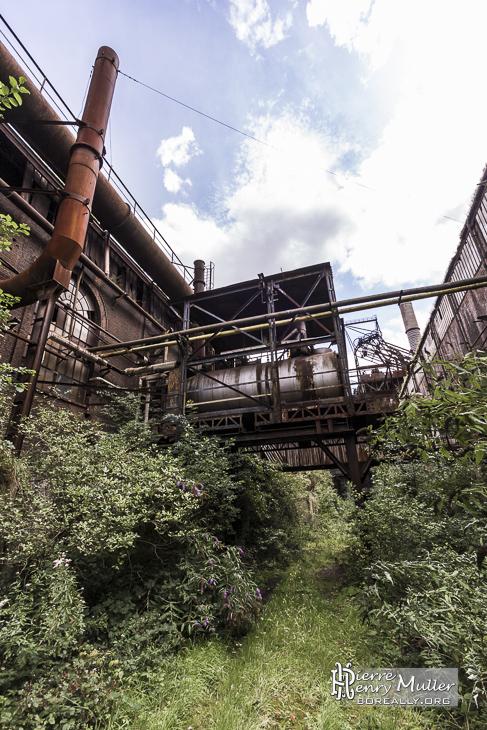 Végétation dans la forge de Clabecq
