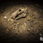 Crane d'un lièvre dans les souterrains du Fort