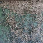Texture de peinture écaillée verte sur un mur