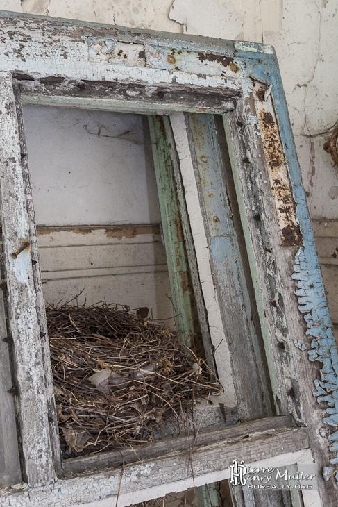 Nid d'oiseaux installé entre les bâtis de fenêtres