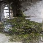 Sol couvert de mousse à l'intérieur d'un bâtiment de la papeterie