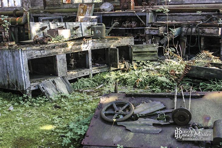 Atelier mécanique abandonné reprit par la nature dans l'usine SAFEA