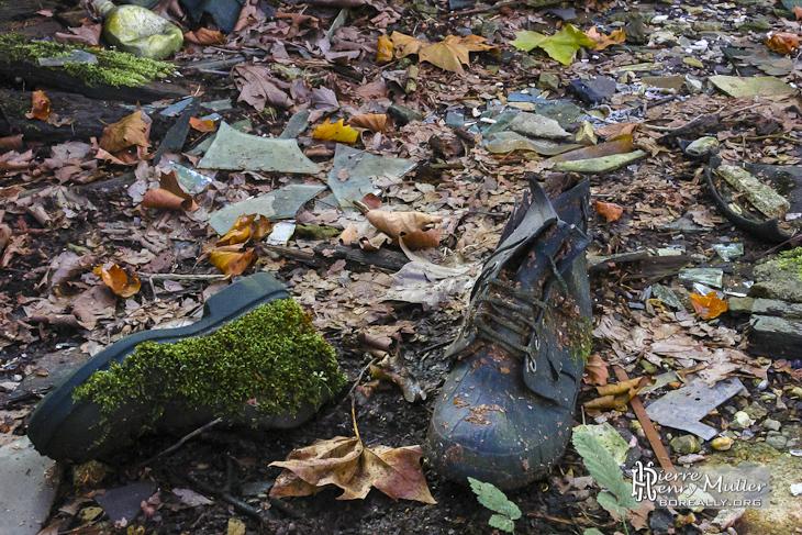 Mousse envahissant une paire de chaussure abandonnée sur un lit de végétation SAFEA