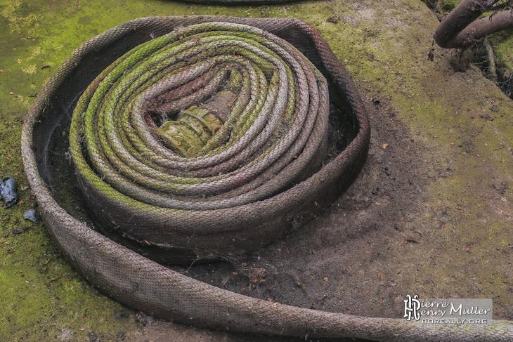 Tuyau de lance incendie enroulé reprit par la végétation à l'usine SAFEA