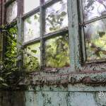 Végétation entrant par une fenêtre dans la friche industrielle SAFEA