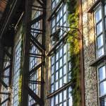 Végétation grimpante sur les murs d'un hangar de l'usine SAFEA