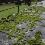 Développement de mousse sur les balcons du sanatorium du Vexin