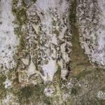 Murs tachés de moisi à l'usine Pierre Laulhère