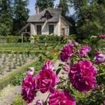 Roses devant le Boudoir ou Petite maison de la Reine dans le Hammeau de la Reine