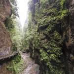 Végétation luxuriante dans les Gorges de Kakuetta