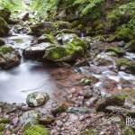 Pause longue d'un ruisseau de montagne dans la forêt