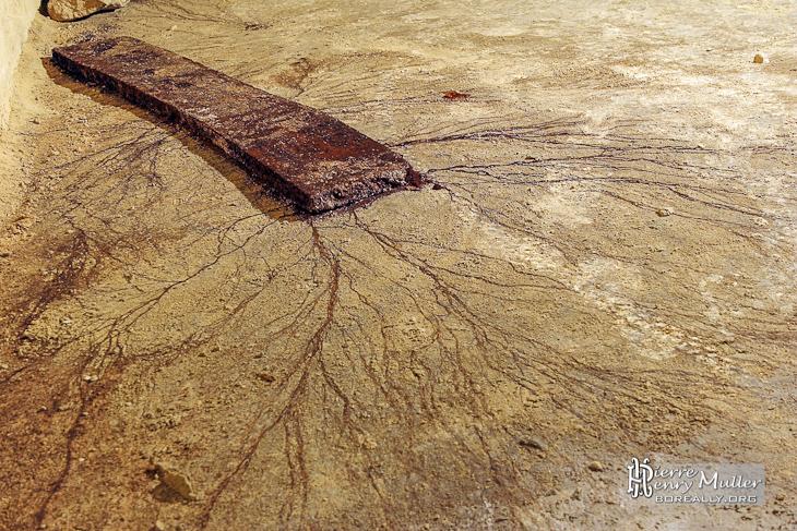 Planche de bois en décomposition dans la carrière Hennocque