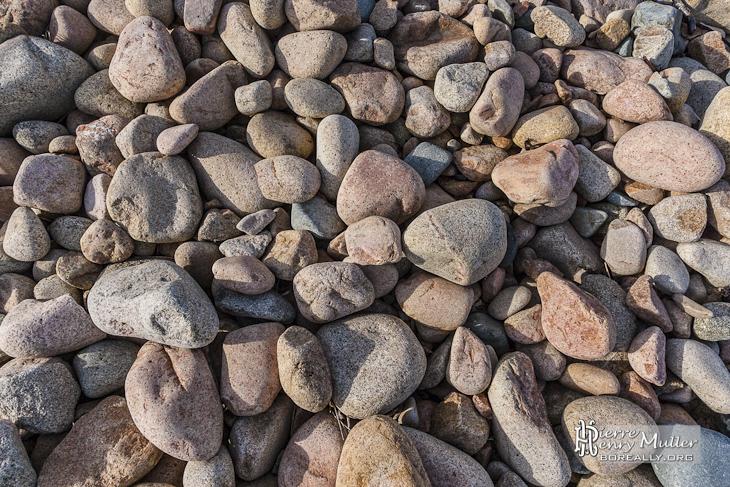 Texture de galets de granite rose de taille moyenne sur l'Ile de Bréhat