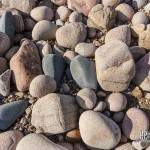 Texture de gros galets de granite rose sur l'Ile de Bréhat