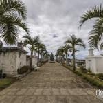 Allée de palmiers dans le cimetière marin de Saint-Paul