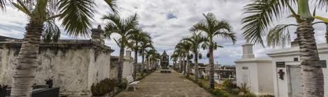 Allée de palmiers dans le cimetière marin de Saint-Paul...