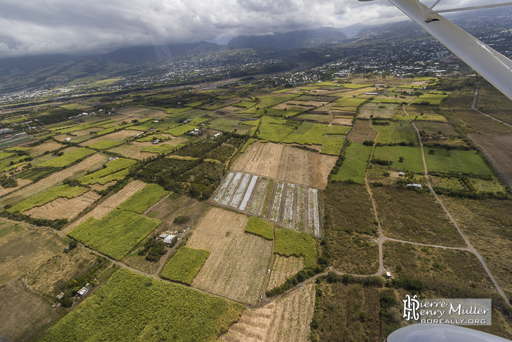 Champs de canne à sucre vue du ciel à proximité de Saint-Pierre Réunion