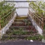 Escalier reprit par la végétation dans un hôtel en friche
