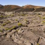 Formica Léo dans l'enclos Fouqué à la Réunion