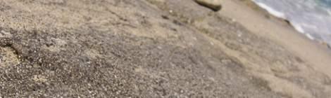 Morceau de corail échoué sur une plage de la Réunion