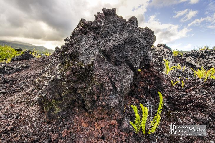 Rocher volcanique et végétation en TTHDR à la Réunion
