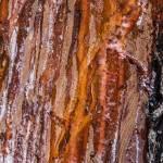 Proxyphoto d'un tronc de pin avec résine