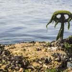 Anneau d'amarrage, algues et coquillage