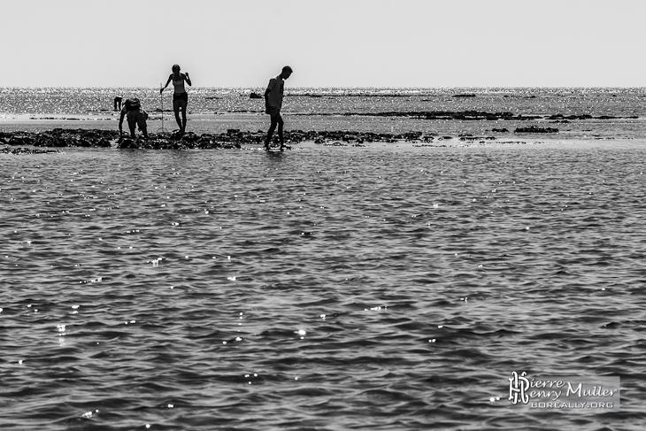 Pêcheurs à pieds sur le plateau de Cordouan