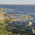 Touristes regagnant le banc de sable Ile sans nom sur le plateau de Cordouan